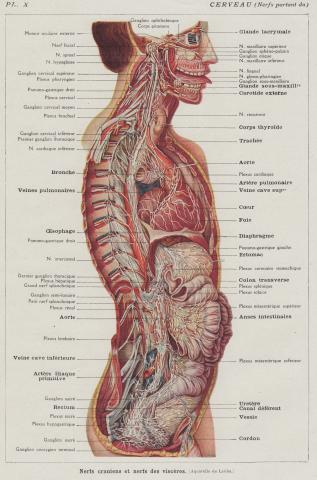 apc back ups diagram anatomy tongue whereapy back massage diagram #5